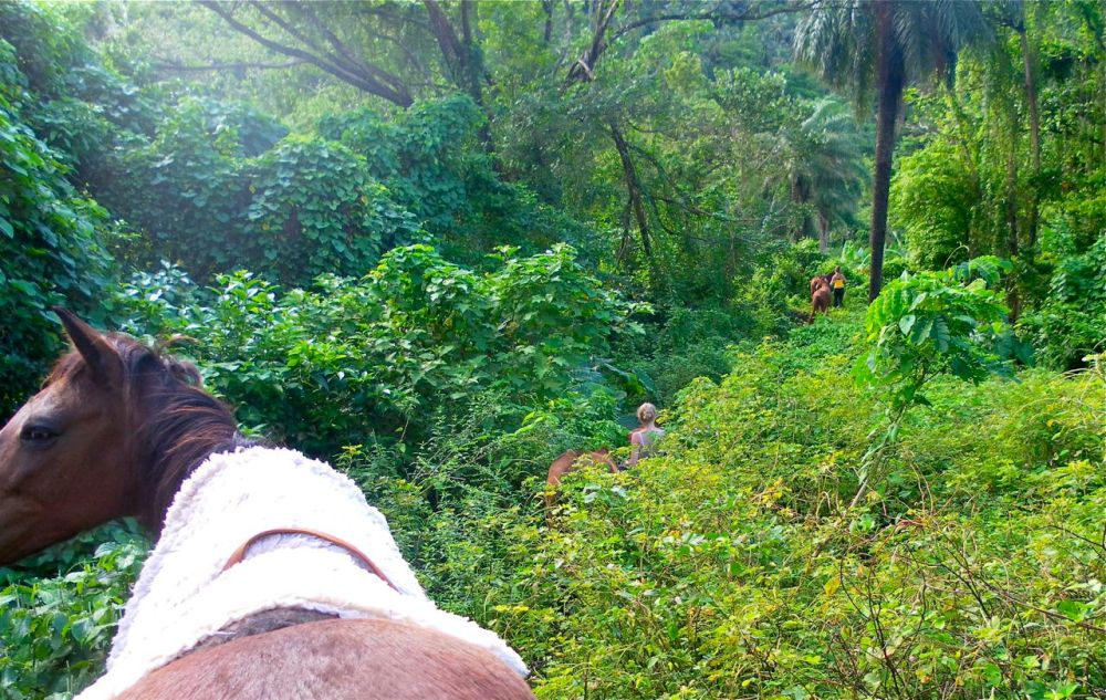 Horse Hike with Stina