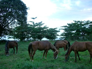 My herd in 2007