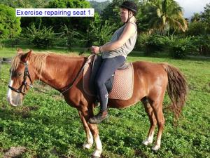 The Classical Dressage Seat