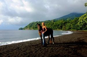 horsemanship caribbean