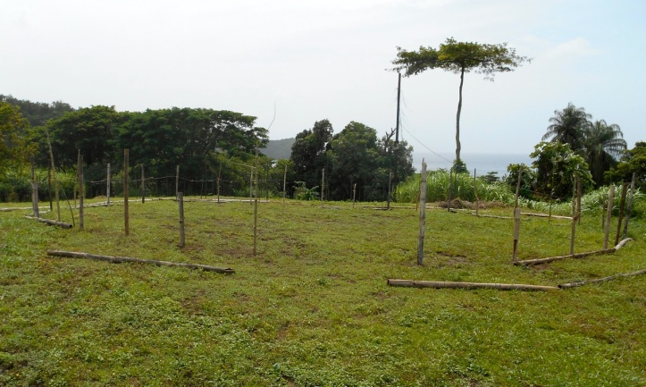 Moringa Training Area
