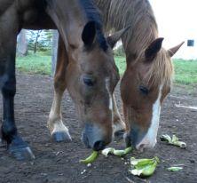 Sharing bananas