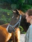 Sahaja Clinic Horses