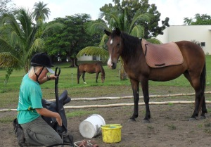 If you wish to ride your horse. Once you can communicate from the ground, it is possible to transfer your communication to the back of the horse. Here is working student Lisa teaching Spirit to enjoy the saddle.