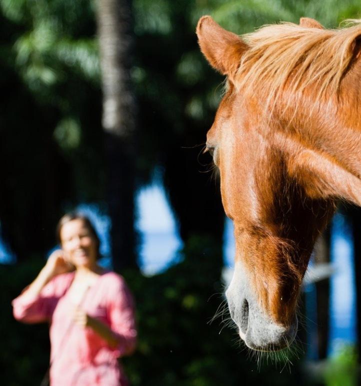 2013-01-13 Horse Lesson_0061_bea