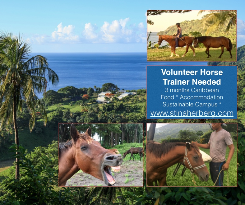Volunteer Horse Trainer Needed!