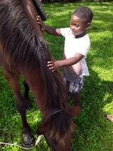 SVG Horse School